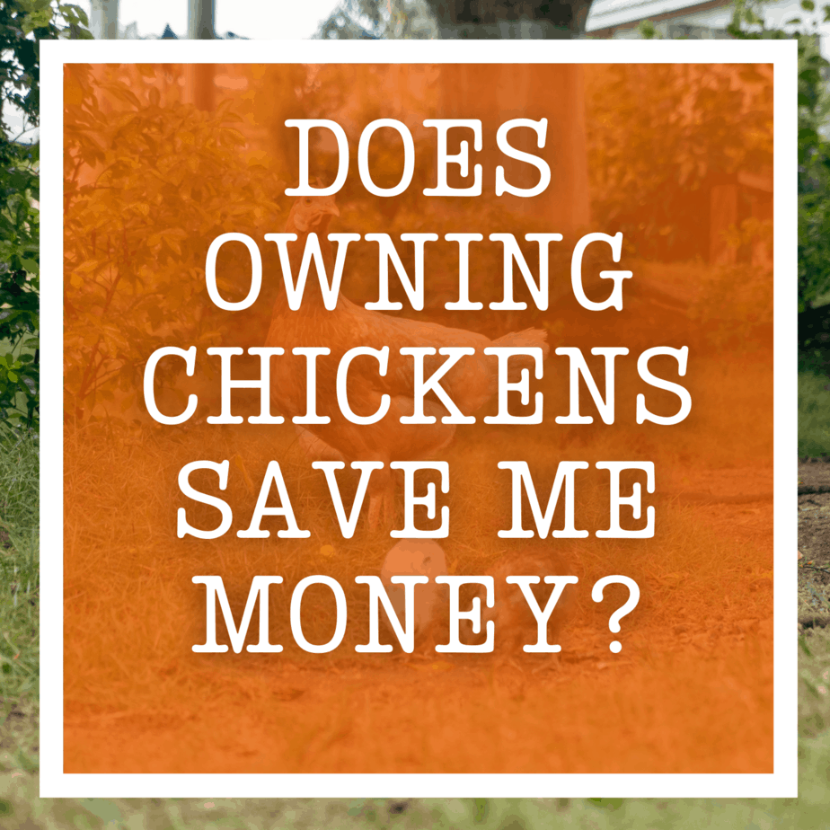 Does Owning Chickens Save Me Money?