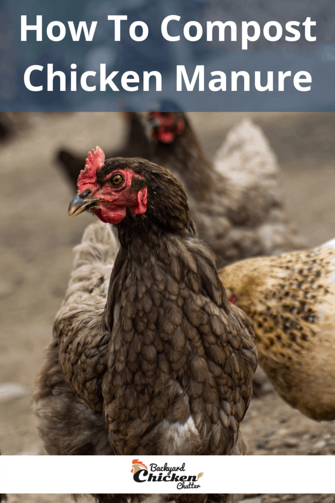 How To Compost Chicken Manure