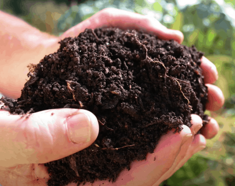 How to Compost Chicken Poop