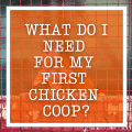 What Do I Need For My First Chicken Coop?