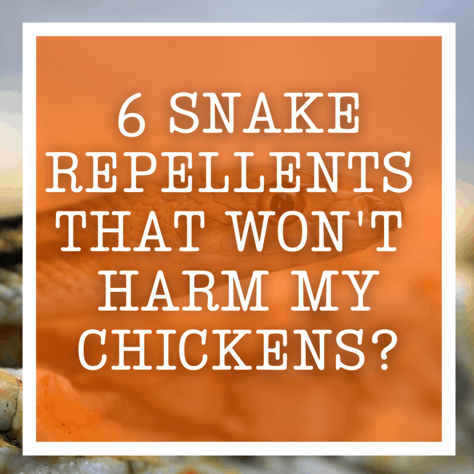 6 Snake Repellents That Won't Harm My Chickens?