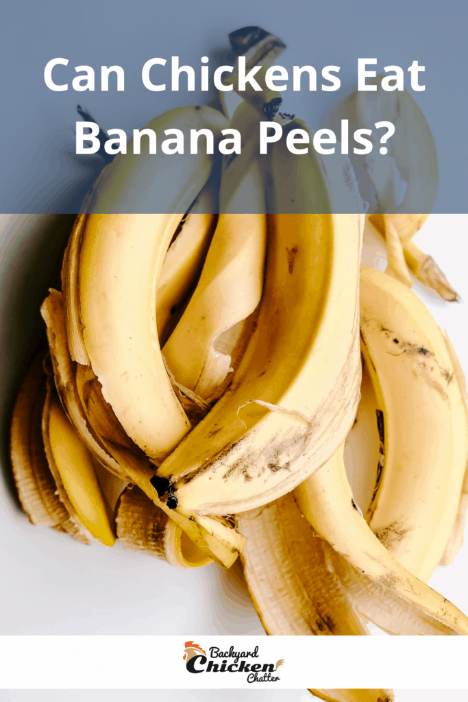 Can Chickens Eat Banana Peels?