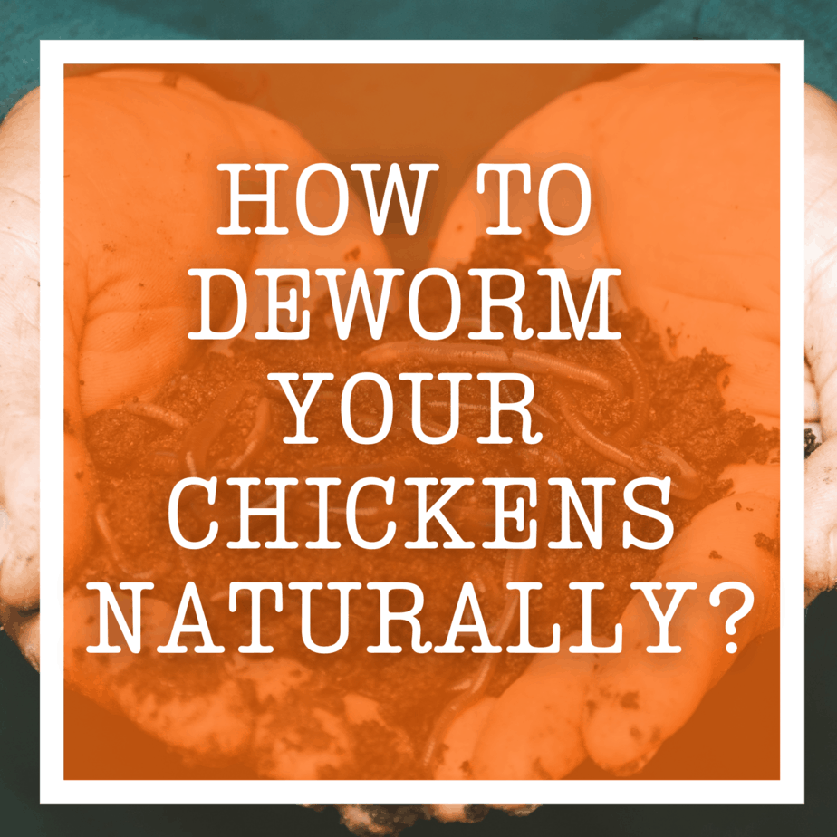How To Deworm Your Chickens Naturally?