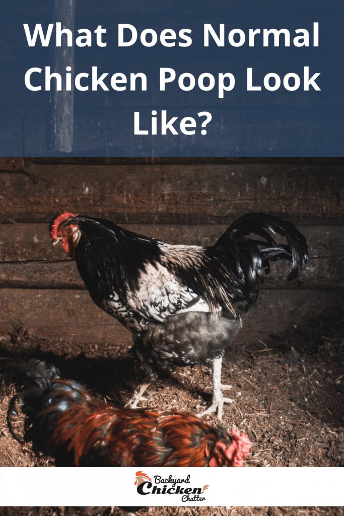 What Does Normal Chicken Poop Look Like?