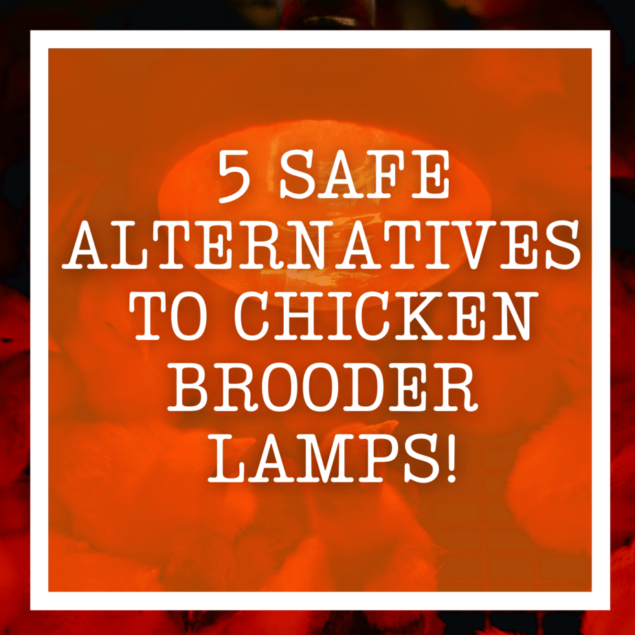 5 Safe Alternatives to Chicken Brooder Lamps!