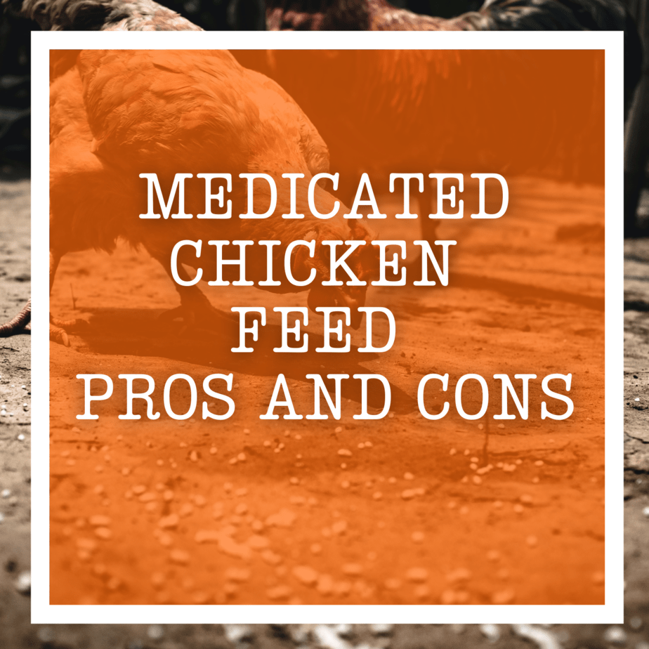 Medicated Chicken Feed Pros and Cons