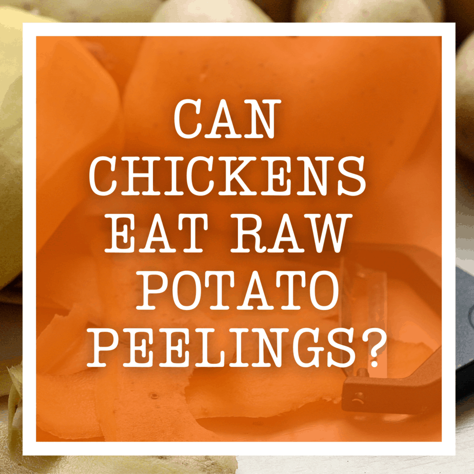 Can Chickens Eat Raw Potato Peelings?