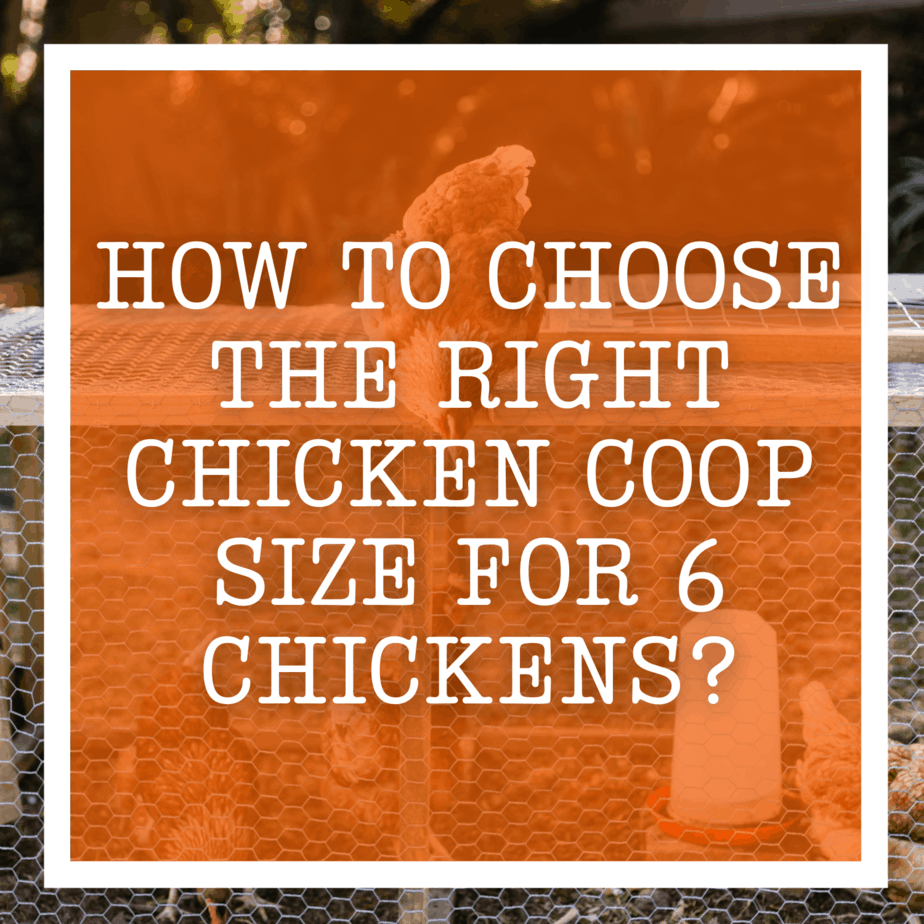 How To Choose The Right Chicken Coop Size For 6 Chickens?