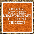 8 Reasons Why Dried Mealworms Are Good For Your Chickens