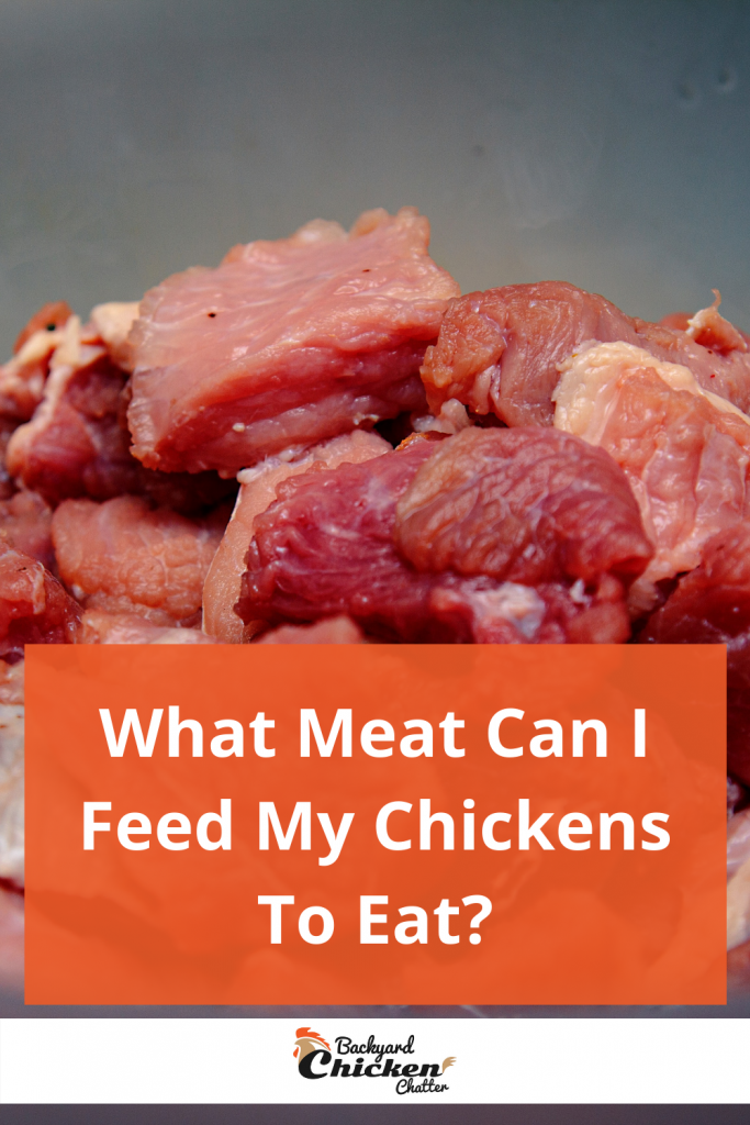 What Meat Can I Feed My Chickens To Eat?