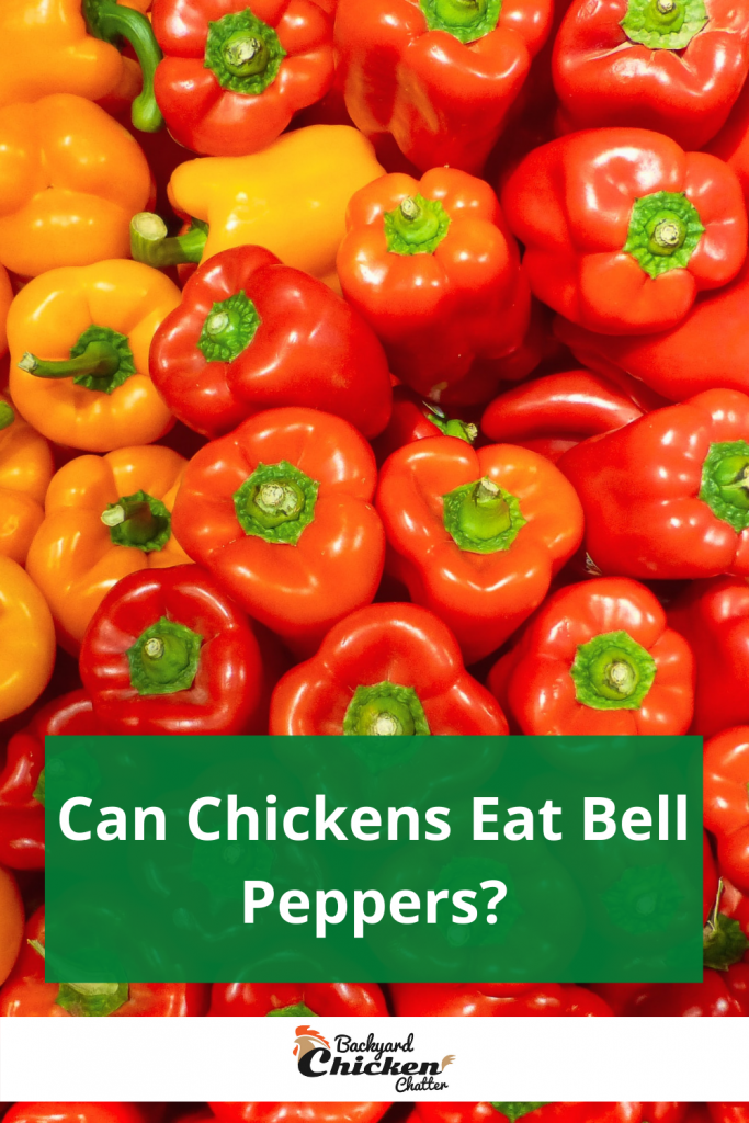 Below is a Pinterest-friendly photo…. so you can pin it to your Backyard Chicken Board!!