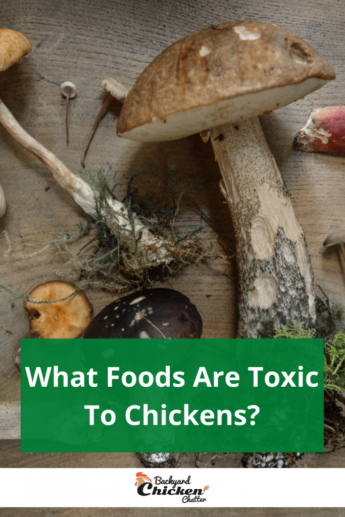 What Foods Are Toxic To Chickens?