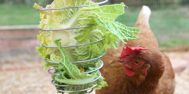 The Chicken Brain: A Fascinating Anatomy
