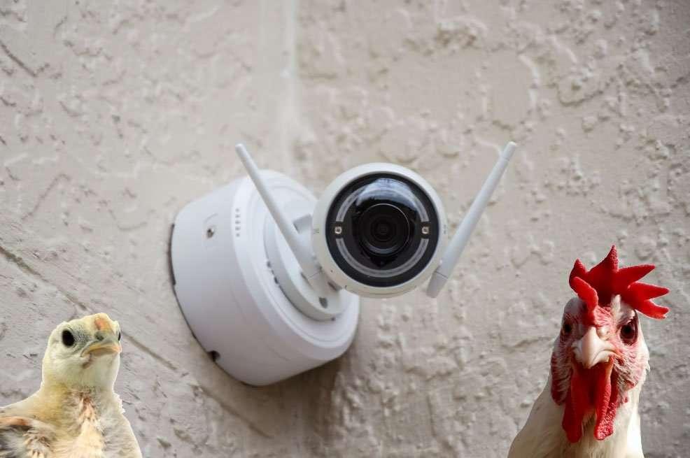 Best Chicken Coop Cameras for Safety and Surveillance